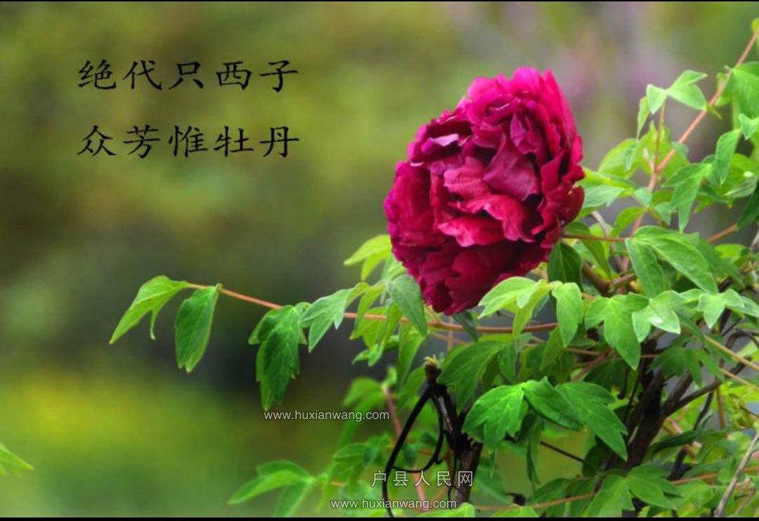 微信图片_20190414102107.jpg